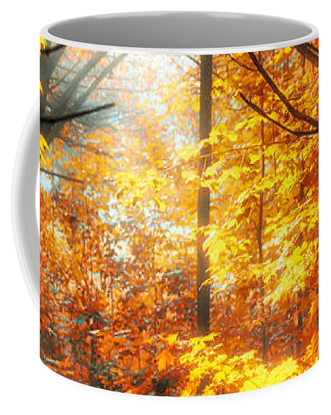 Woods Coffee Mug featuring the photograph Sunrise Mist Through The Trees by Bob Orsillo