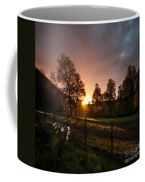 Coffee Mug featuring the photograph Sunset And Daffodils by Angel Ciesniarska