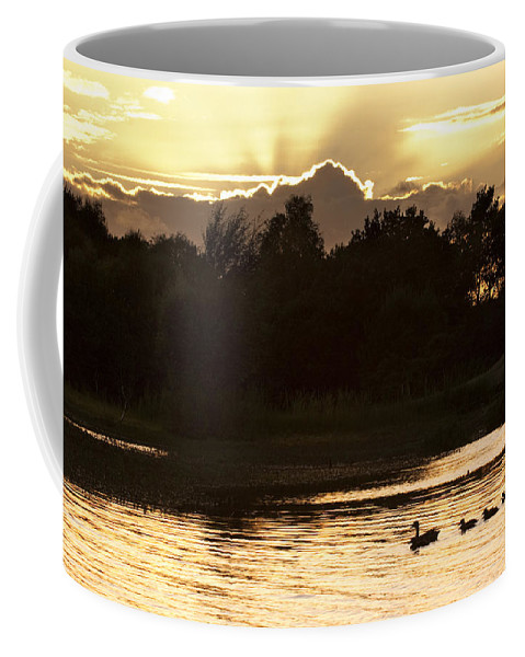 New Forest Coffee Mug featuring the photograph Sunset By The Lake by Angel Ciesniarska