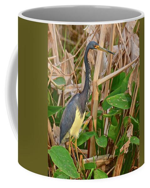 Marsh Coffee Mug featuring the photograph Sunset Search by Carol Bradley