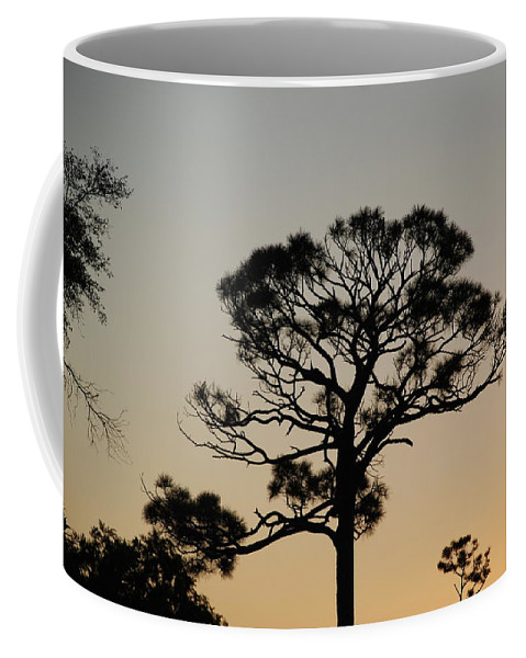 Tree Coffee Mug featuring the photograph Sunsetting Thru The Trees by Rob Hans