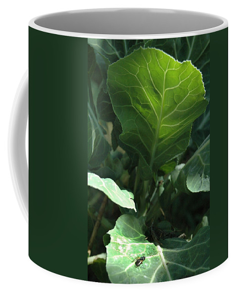 Cabbage Coffee Mug featuring the photograph Super-fly Cabbage by Trish Hale