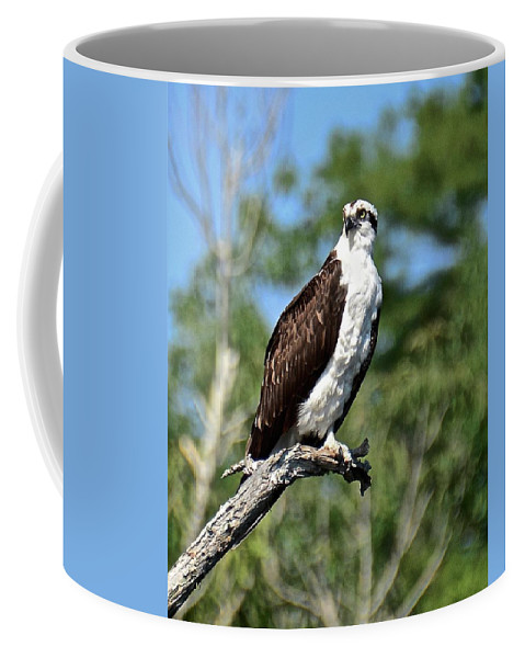 Bird Coffee Mug featuring the photograph Supervisor Of Security by Carol Bradley