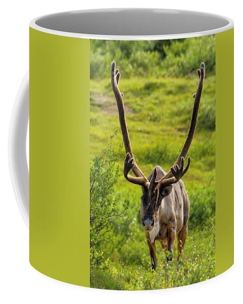 Surprise Coffee Mug featuring the photograph Surprise by Chad Dutson