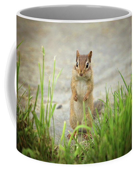 Animals Coffee Mug featuring the photograph Surprise by Sue Collura