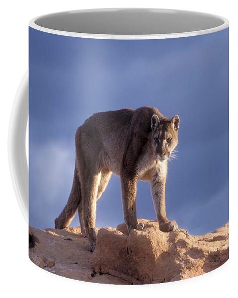 Cougar Coffee Mug featuring the photograph Surveying The Territory by Sandra Bronstein