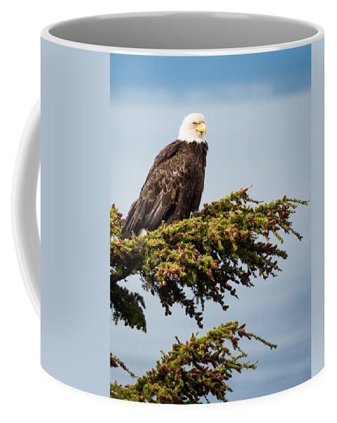 Alaska Coffee Mug featuring the photograph Surveying The Treeline by Tim Newton