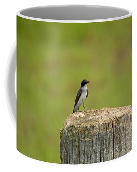 Tree Swallow Coffee Mug featuring the photograph Swallow On A Stump by Linda Kerkau