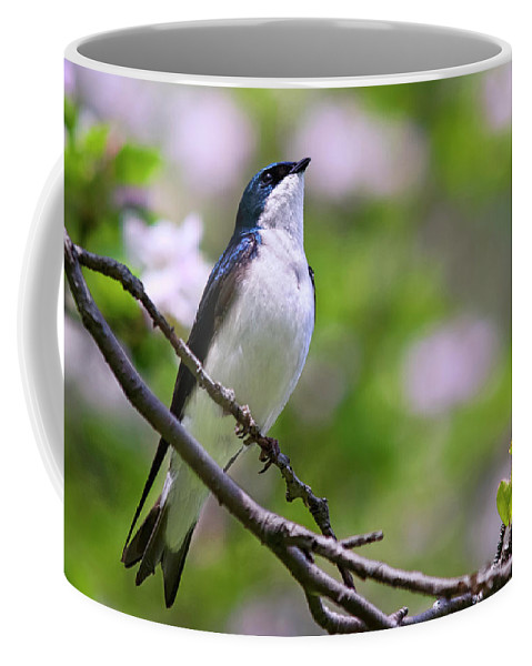 Bird Coffee Mug featuring the photograph Swallow Song by Christina Rollo