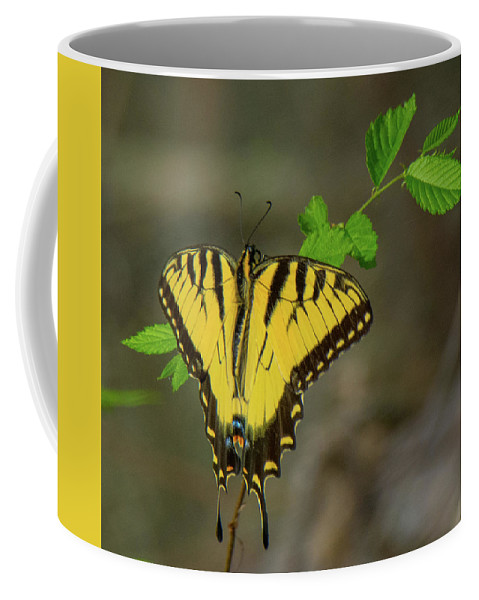 Butterfly Coffee Mug featuring the photograph Swallow Tail Butterfly by John Ruggeri