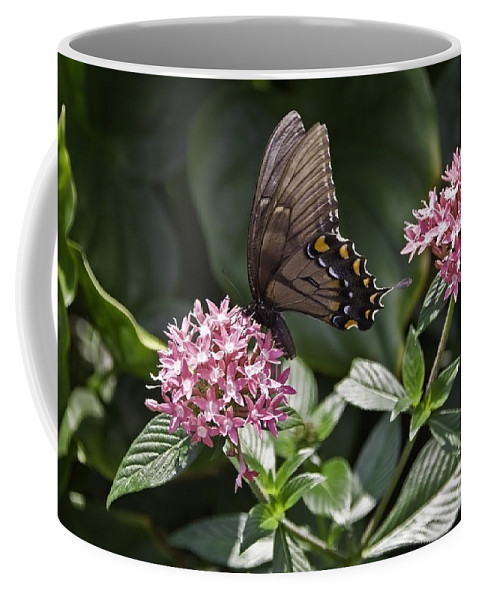 Buttrfly Coffee Mug featuring the photograph Swallowtail Buterfly by Sven Brogren