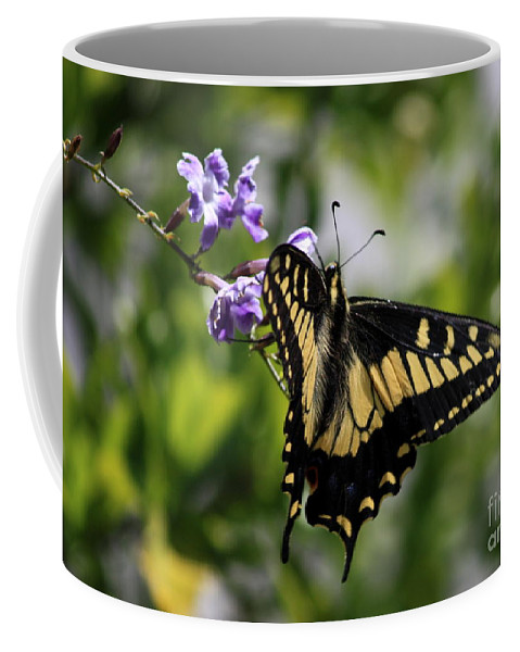 Swallowtail Butterfly Coffee Mug featuring the photograph Swallowtail Butterfly 2 by Carol Groenen