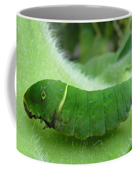 Tiger Swallowtail Caterpillar Images Tiger Swallowtail Caterpillar Prints Tiger Swallowtail Caterpillar Pics Tiger Swallowtail Caterpillar Photos Green Caterpillar Images Green Caterpillar Prints Entomology Biodiversity Nature Forest Ecology Coffee Mug featuring the photograph Swallowtail Caterpillar by Joshua Bales