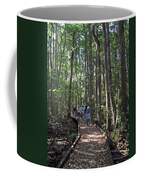Nature Coffee Mug featuring the photograph Swamp Boardwalk by Peg Urban