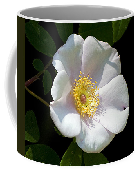 Nature Coffee Mug featuring the photograph Swamp Mallow by Kenneth Albin