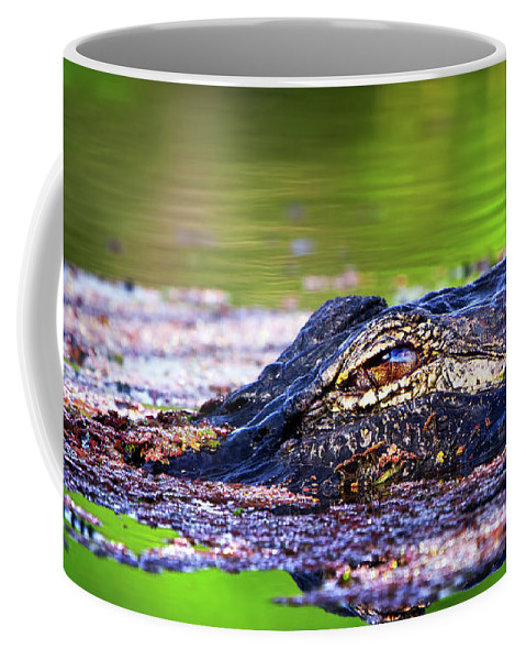 Alligator Coffee Mug featuring the photograph Swamp Patrol by Mark Andrew Thomas