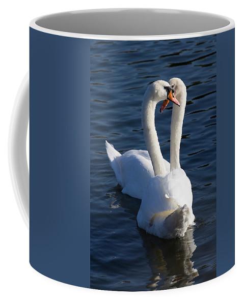 Swan Coffee Mug featuring the photograph Swan Courtship by David Pyatt
