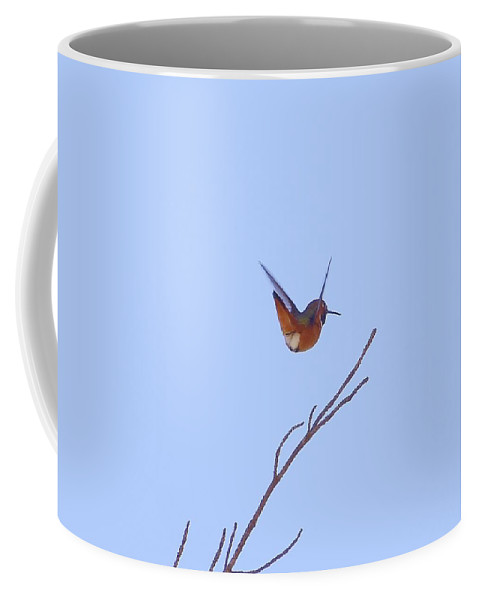 Linda Brody Coffee Mug featuring the photograph Swan Dive by Linda Brody