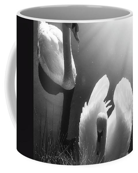 Swan Coffee Mug featuring the photograph Swan Lake In Winter - Kingsbury Nature by John Edwards
