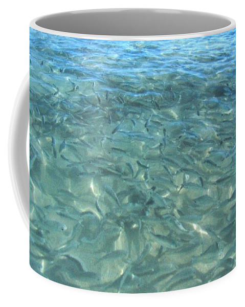 1986 Coffee Mug featuring the photograph Swarming Fish by Will Borden