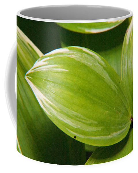 Plant Coffee Mug featuring the photograph Sweeping Green by Douglas Barnett