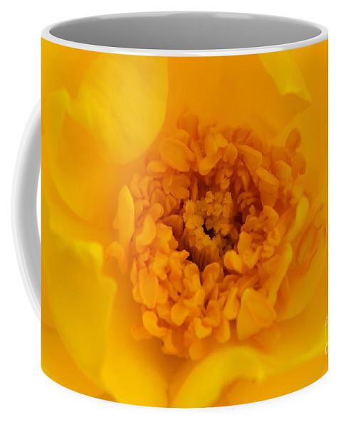 Yellow Coffee Mug featuring the photograph Sweet Heart Of Yellow Rose by Olga Hamilton