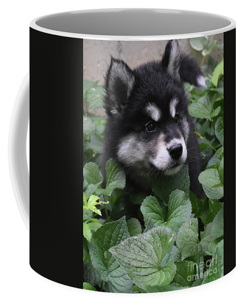 Alusky Coffee Mug featuring the photograph Sweet Markings On The Face Of An Alusky Puppy Dog by DejaVu Designs