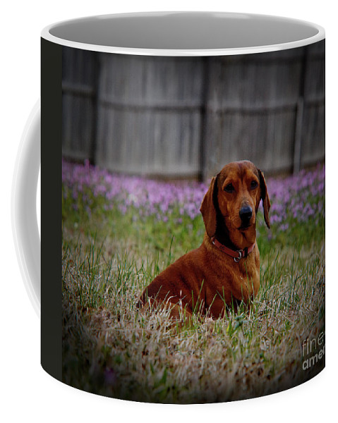 Wiener Dog Coffee Mug featuring the photograph Sweet Neal by Kim Henderson
