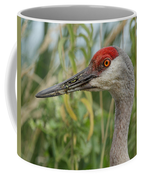 Sandhill Crane Coffee Mug featuring the photograph Sweet Sandie by Jayne Gulbrand