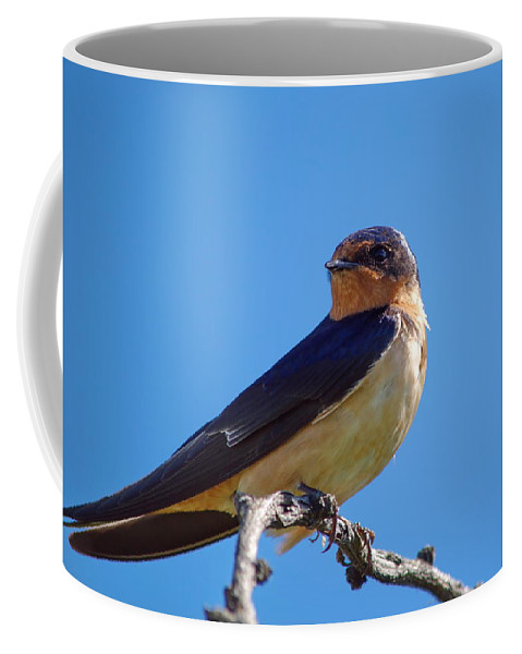 Nature Coffee Mug featuring the photograph Sweet Swallow by Crystal Massop
