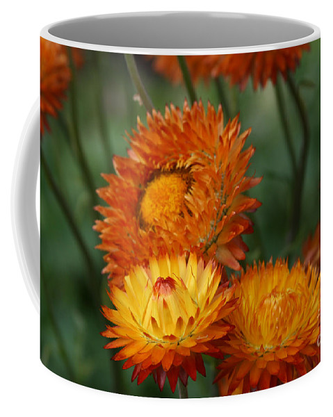 Nature Coffee Mug featuring the photograph Sweet Was The Song by Sharon Mau