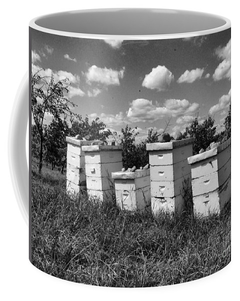 Honey Coffee Mug featuring the photograph Sweetened Nature by September Stone