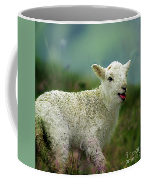 Lamb Coffee Mug featuring the photograph Swet Little Lamb by Angel Ciesniarska
