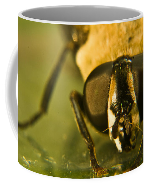Syrphid Coffee Mug featuring the photograph Syrphid Eyes by Douglas Barnett