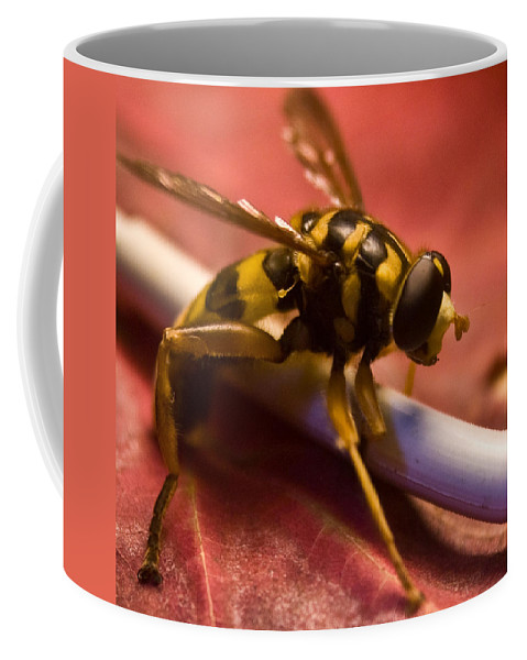 Insect Coffee Mug featuring the photograph Syrphid Fly Poised by Douglas Barnett