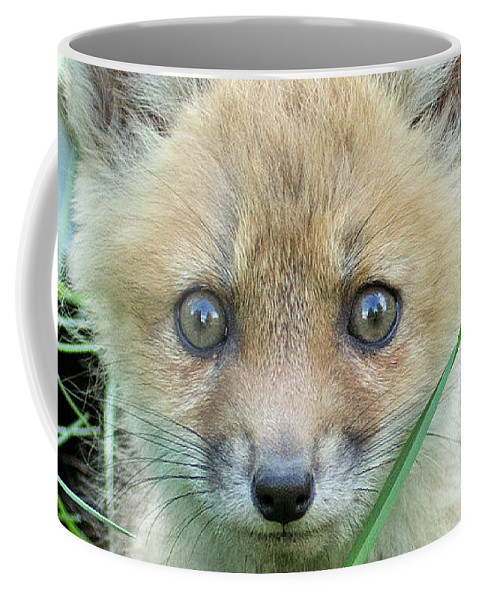 Fox Coffee Mug featuring the photograph Take Me Home by Everet Regal