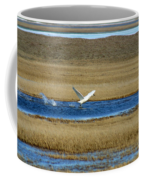 Swan Coffee Mug featuring the photograph Take Off by Anthony Jones