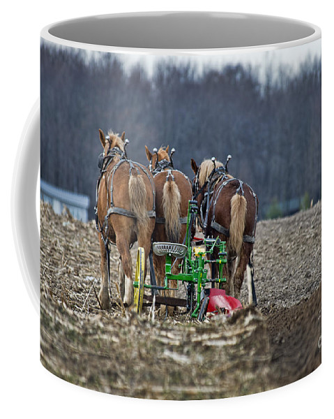 Horses Coffee Mug featuring the photograph Taking A Break by David Arment