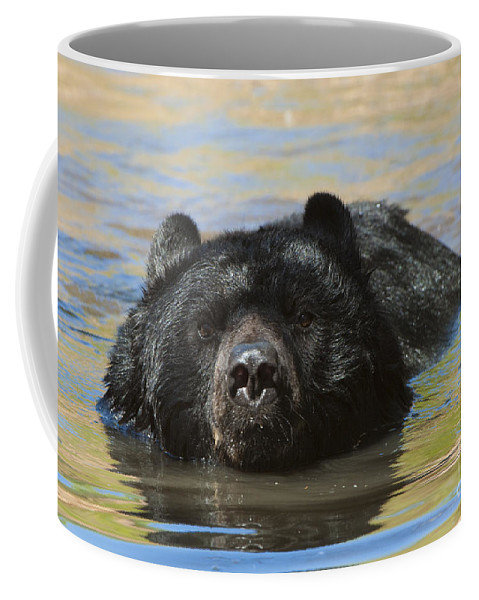 Bear Coffee Mug featuring the photograph Taking A Dip by Sandra Bronstein