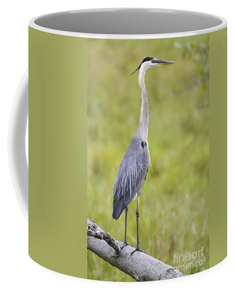 Bird Coffee Mug featuring the photograph Taking In The Scenery by Deborah Benoit