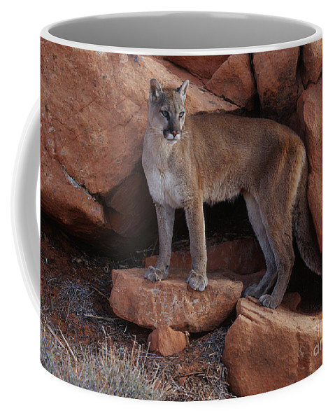 Cougar Coffee Mug featuring the photograph Taking Stock by Sandra Bronstein