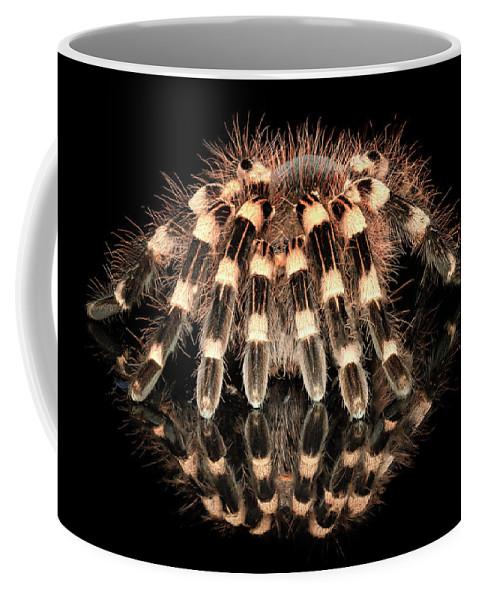 Tarantula Reflection Coffee Mug featuring the photograph Tarantula Reflection by Janet Ballard