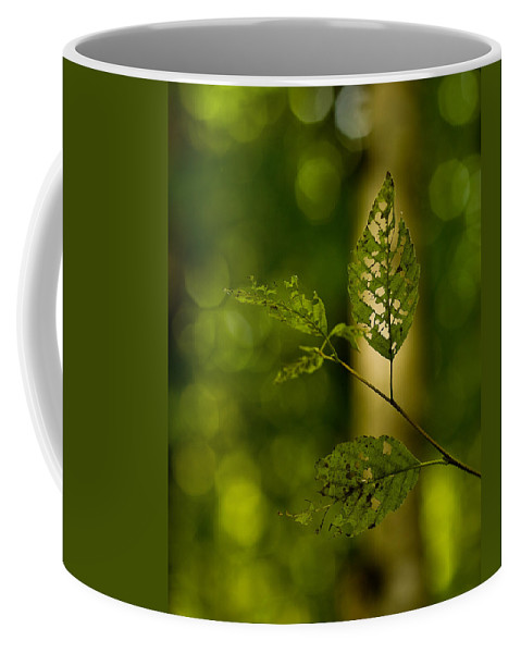 Leaf Coffee Mug featuring the photograph Tattered Leaves by Mike Reid