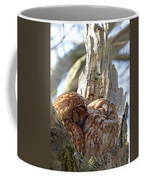 Tawny Owl Coffee Mug featuring the photograph Tawny Owls In Love by Bob Kemp