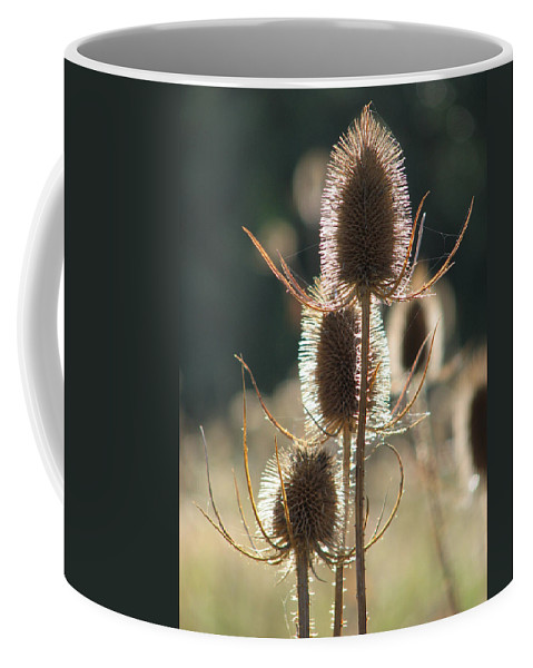 Teasle Coffee Mug featuring the photograph Teasle In Morning Light by Bob Kemp