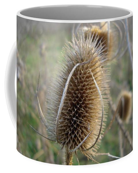 Flora Coffee Mug featuring the photograph Teazle by Susan Baker