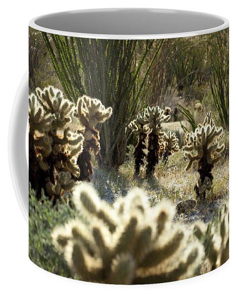 Teddy Bear Cholla Coffee Mug featuring the photograph Teddy Bear Forest by Kelley King
