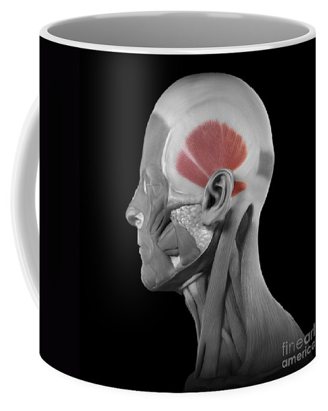 Digitally Generated Image Coffee Mug featuring the photograph Temporalis by Science Picture Co