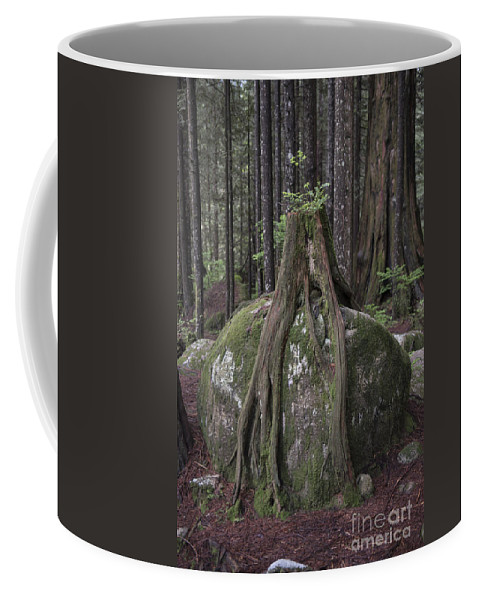 Tentsacles Coffee Mug featuring the photograph Tentacles by Rod Wiens