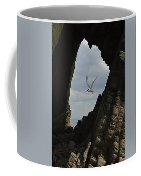 Black Coffee Mug featuring the photograph Tern Through The Gap by Graham Harding